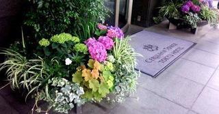 渋谷の寄せ植え.jpg